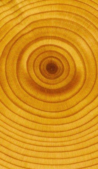фото древесины